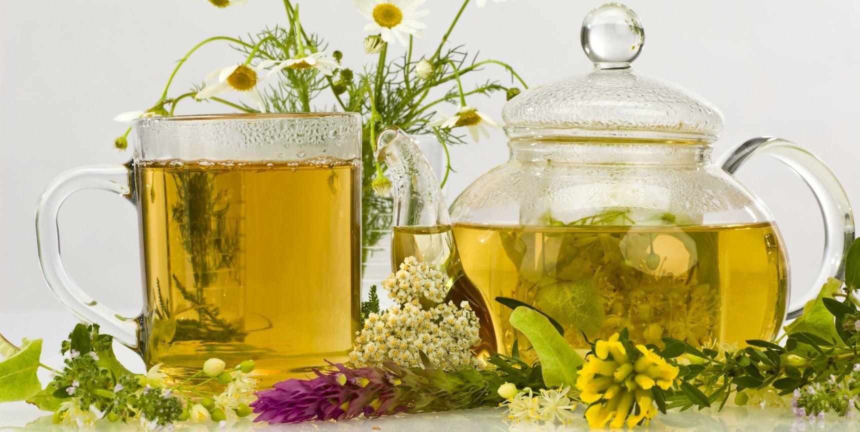 heilkraeuter fuer Verdauung und stoffwechsel pano