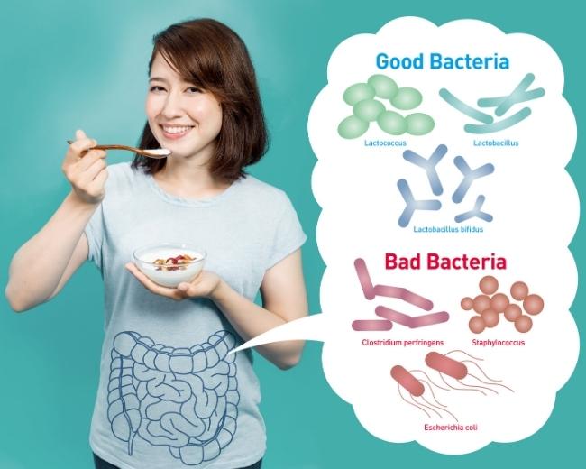 Gesunde Darmflora für die Immunabwehr